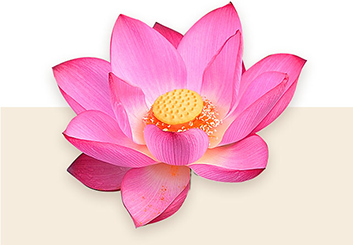 The body of the fragrance is a beautiful bouquet of Lotus Flower enriched with Jasmine